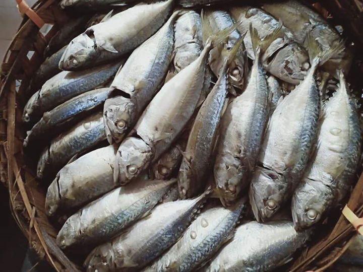 Aslm  Meh  Kita Nlajo Ikan Rebus