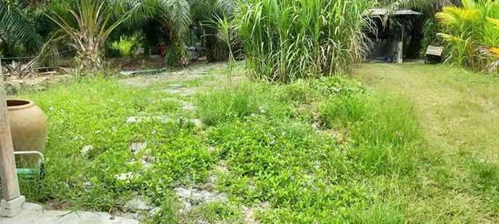 Sebelum Dan Selepas Mesin Rumput Di Kawasan Sekeliling