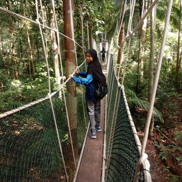 Canopy Walk Walkway