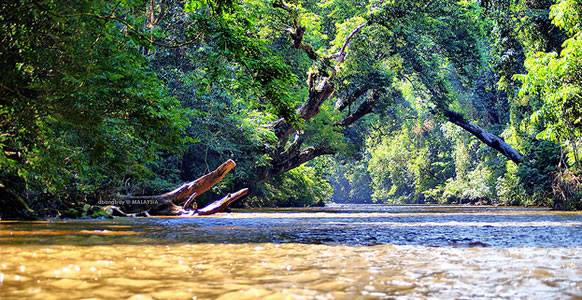 4d3n National Park (taman Negara) Full Board Package