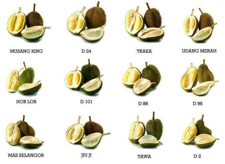 Jenis Durian Di Malaysia.