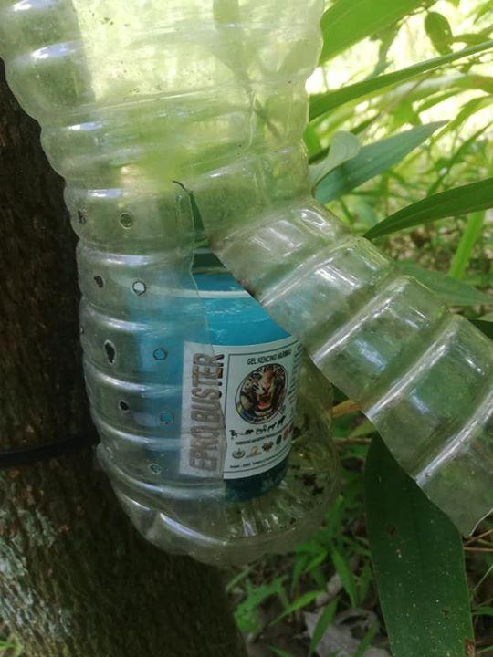Pasang Air Kencing Harimau  Dekat Kebun.sesuai Untuk