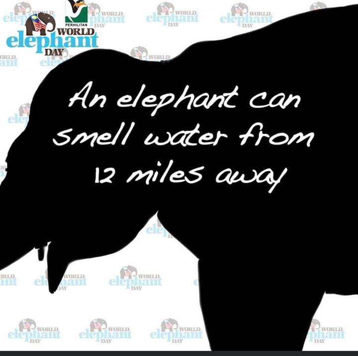 [fakta Menarik Gajah]