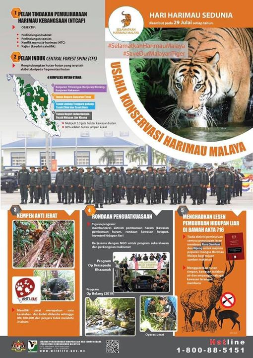 [kempen Selamatkan Harimau Malaya: Usaha Konservasi]