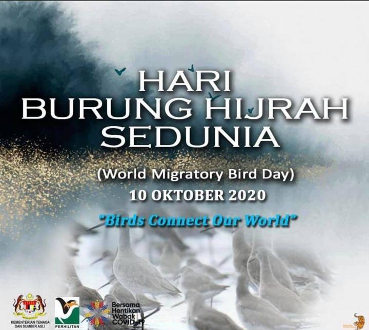 [hari Burung Hijrah Sedunia/world Migratory Bird Day 2020]