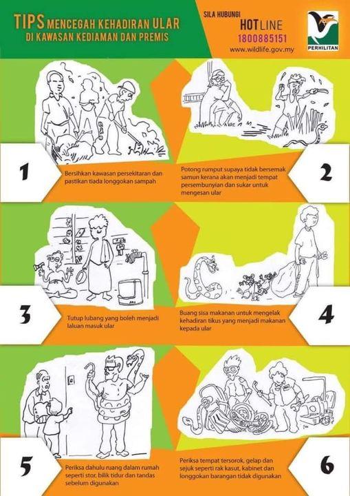 [tips Mencegah Kehadiran Ular Di Kawasan Kediaman Dan