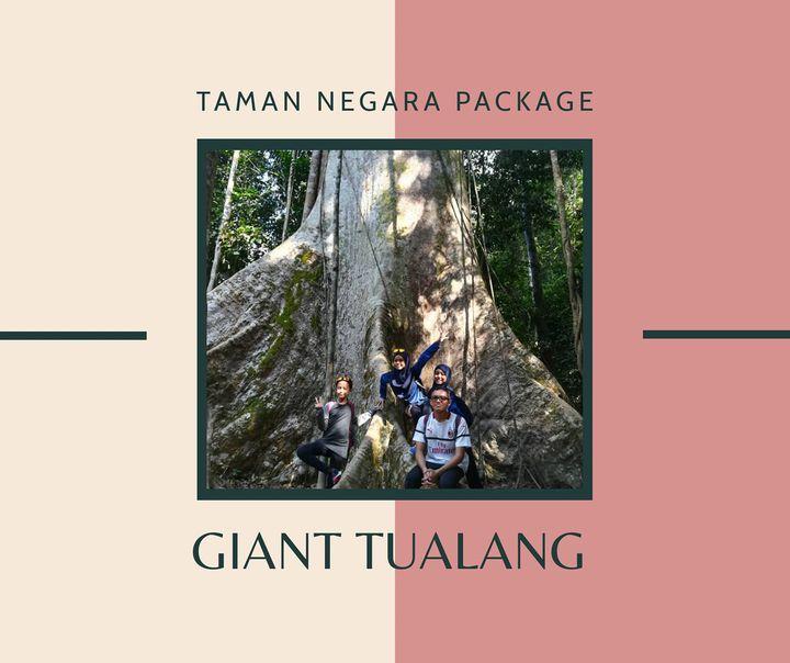 Giant Tualang